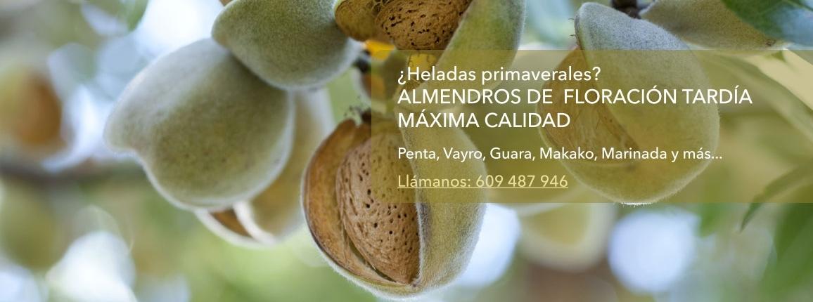 almendros floracion tardia maxima calidad llamar al teléfono 609 487 946