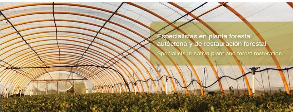 Invernadero especialista en planta forestal autóctona y de restauración