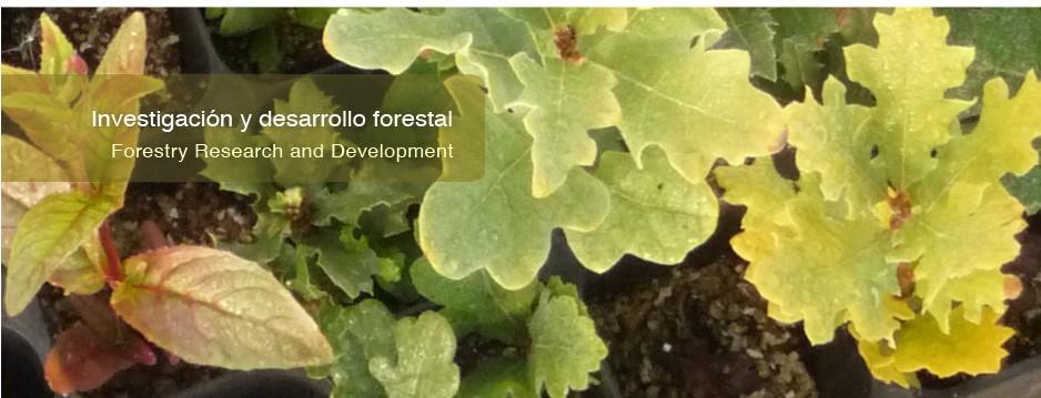 Hojas de investigación y desarrollo forestal
