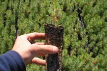 Mano sujetando planta con raíz
