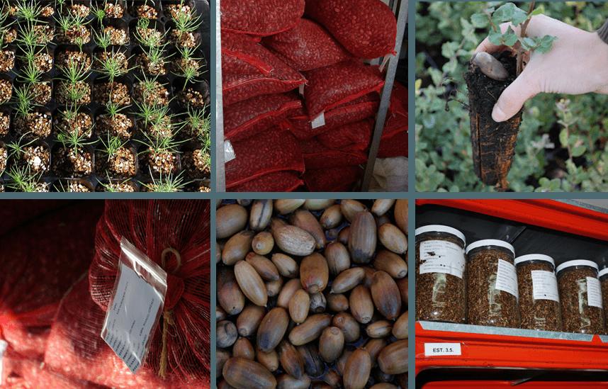 Pasos de la planta desde el semillero, cepellón, embolsado, etiquetado...